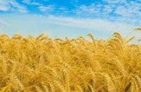На Днепропетровщине создались удовлетворительные условия для посева, роста и развития озимых , - Гидрометцентр