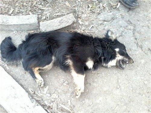 Судороги у собаки и слюнотечение