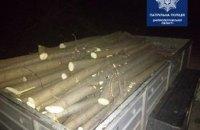 На Днепропетровщине фиксируются случаи незаконной вырубки деревьев