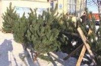 На Днепропетровщине непроданные елки и сосны отправят бездомным животным (ВИДЕО)