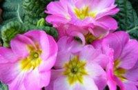 В Днепропетровске пройдет выставка цветов
