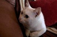 Онлайн-база потерянных животных в Днепре: кот и 2 собаки ищут хозяев(ФОТО)