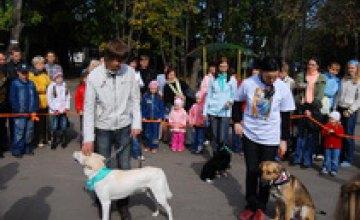 В Днепропетровске пройдет выставка беспородных собак
