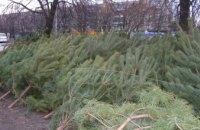 В Днепропетровской области отмечается резкое падение спроса на «живые» елки