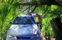 В Днепре на легковой автомобиль упала 8-ми метровая ветка