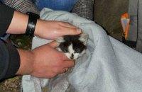 В Днепре на проспекте Яворницкого котенок упал в ливневку