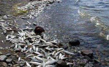 На Днепре зафиксировали массовый мор рыбы