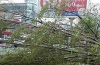В Новомосковске пенсионерку убило упавшим деревом