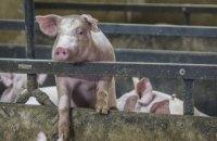 Новорожденного ребенка выбросили в шахту отстойника около свинофермы