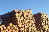 На Днепропетровщине СБУ разоблачила незаконную схему экспорта леса