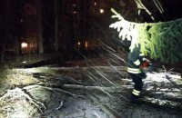 Спасатели Днепра убрали упавшее на электропровода дерево