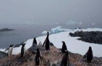 Ученые завезут в Антарктику лед