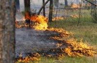 С начала лета в лесах Днепропетровщины произошло 60 пожаров