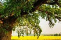 Ученые рассказали, сколько видов деревьев растет на Земле