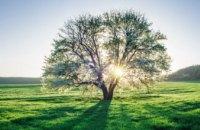 Деревья просыпаются: участники акции «Посади дерево - спаси город» делятся фото