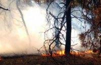 За минувшие сутки на Днепропетровщины ликвидировали три лесных пожара