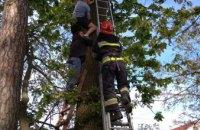 В Ровненской области спасатели сняли с дерева мужчину, который пытался снять кота