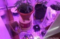 Выращивал марихуану в теплицах: на Днепропетровщине накрыли «наркоферму» (ВИДЕО)