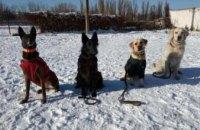 На Днепропетровщине воспитанники кинологического клуба получили статус «собака- терапевт» (ФОТО)