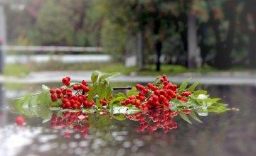 Погода в Днепре 2 ноября: существенное потепление и мелкий дождь