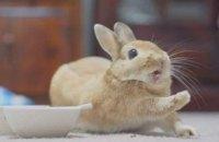 В Одесской области мужчину посадили на три года за кражу кролика