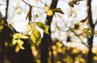 Погода в Днепре 5 апреля: тепло и без осадков