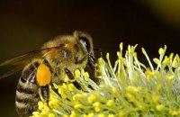 В Японии создали пчелу-робота