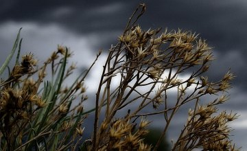 Жителей Днепра и области предупредили об ухудшении погодных условий