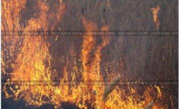 В Днепропетровске в результате возгорания камыша погибла женщина