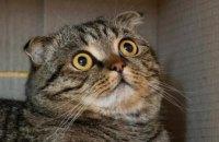 Мурчание кошек продлевает жизнь человека, – ученые