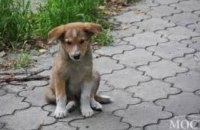 Приют для собак «Друг» находится под угрозой закрытия из-за отсутствия дороги к нему