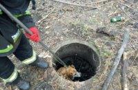 В Днепре на ж/м Тополь – 3 спасли собаку, которая провалилась в люк (ФОТО, ВИДЕО)