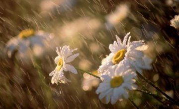 В Днепропетровской области снова штормит: сильный ветер, ливни и жара