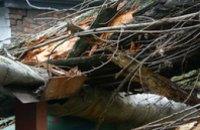 На 12-м квартале упавшее дерево завалило электроопору и оборвало контактную линию