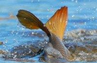 С начала нерестового запрета в Днепропетровской области браконьеры выловили более 2 тонн рыбы