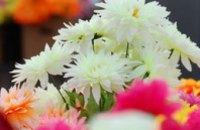 В Днепропетровске цветы стоимостью 50 центов продают по 50 грн