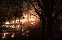 В Днепропетровской области выгорело 8 га леса (ФОТО)