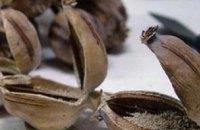 В Кривом Роге ОПГ каждый день продавала «ширки» на 100 тыс грн