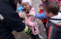 В Днепре на Донецком шоссе спасатели сняли с дерева кота, который не мог самостоятельно спуститься на землю (ФОТО)