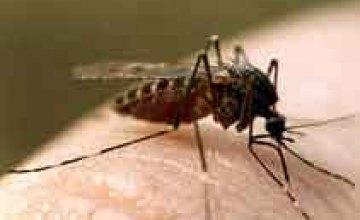 В Павлограде нашествие комаров