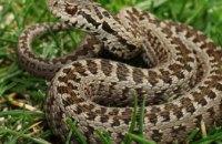 В Днепре из-за теплой погоды до сих пор остаются активными змеи: как обезопасить себя