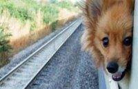 Украинцы теперь смогут перевозить животных в плацкартных вагонах