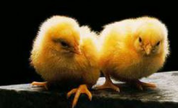 В Украине обнаружили птичий грипп