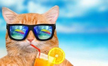 Днепрянам рассказали, как уберечь своё самочувствие и здоровье в жаркую погоду
