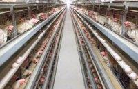 «Аналогов в мире нет»: на днепровском заводе изобрели замену соевым ГМО - кормам для животных (ВИДЕО)