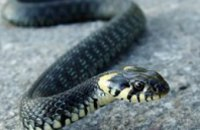 В Днепродзержинске в дом заползла змея