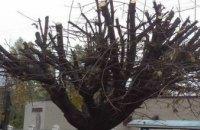 Днепряне возмущены «лысыми деревьями» на проспекте Поля (ФОТО)
