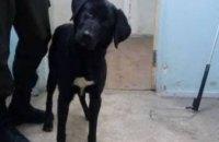 Онлайн-база потерянных животных в Днепре: псы в поисках хозяев (ФОТО)