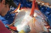 Ученые нашли первую в мире теплокровную рыбу (ВИДЕО)