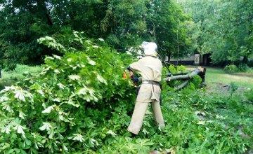 На Днепропетровщине большое дерево упало и перекрыло движение транспорта